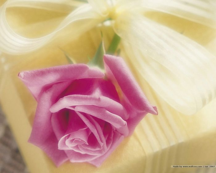 119 best Yanni\'s Roses images on Pinterest | Beautiful flowers ...