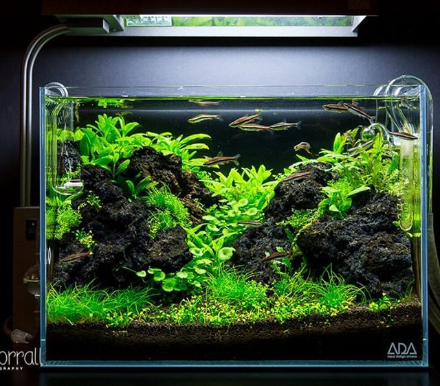 17 best images about planted aquariums on pinterest for Planted fish tank