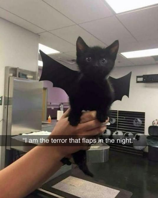 Batcat... omg I'm dying, this so so freaking cuuute!!!