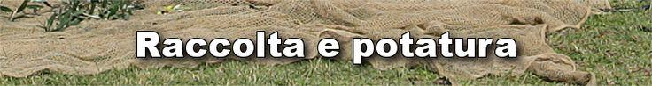 Catalogo Raccolta e Potatura - Agrihobby https://agrihobby.com/agricoltura/raccolta-e-potatura.html Offerte e vendita di attrezzature e accessori per la raccolta, la potatura elettrica e pneumatica nei frutteti e negli uliveti. Nel nostro catalogo troverai una vasta gamma di #abbacchiatori, #scuotitori, agevolatori, potatori, raccoglitori per olive.