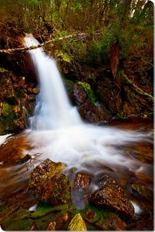 Crater Falls Cradle Mt - Lake St. Clair National Park Tasmania Images in Forestscapes album | Page 1 of 3 - Yegor Korzh :: Travel Photography