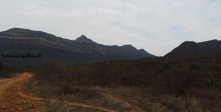 Chaparrí es un centro de investigación científica dedicado a los ecosistemas del bosque seco y a las especies que lo habitan.