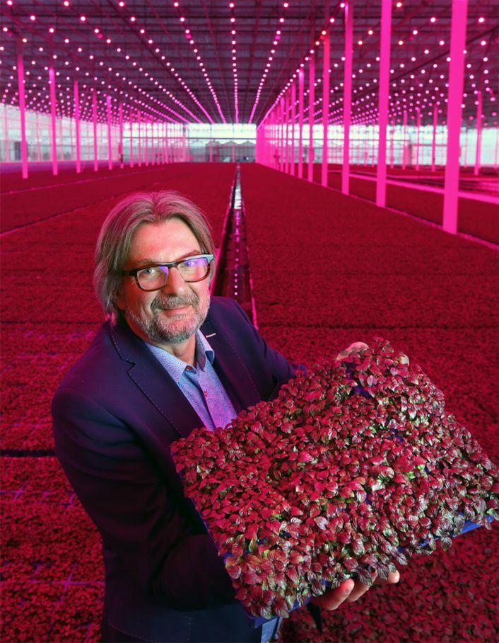 Willy Wonka's smaakvolle microgroenten | De Ondernemer