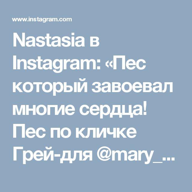 Nastasia в Instagram: «Пес который завоевал многие сердца! Пес по кличке Грей-для @mary_pitosha #blackdog #пес #добрыйпес #рисую_сейчас #рисуюпастелью…»