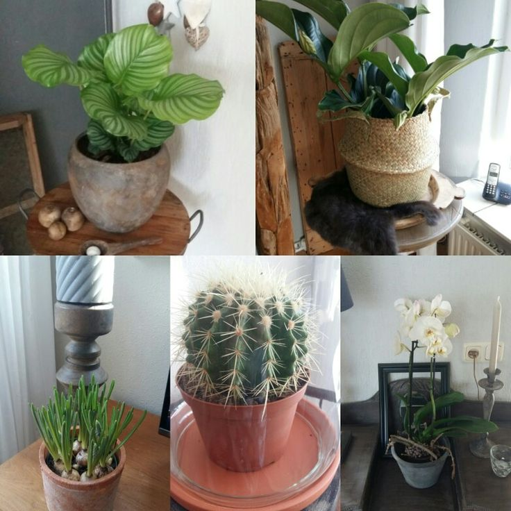 Rondje planten in huis.