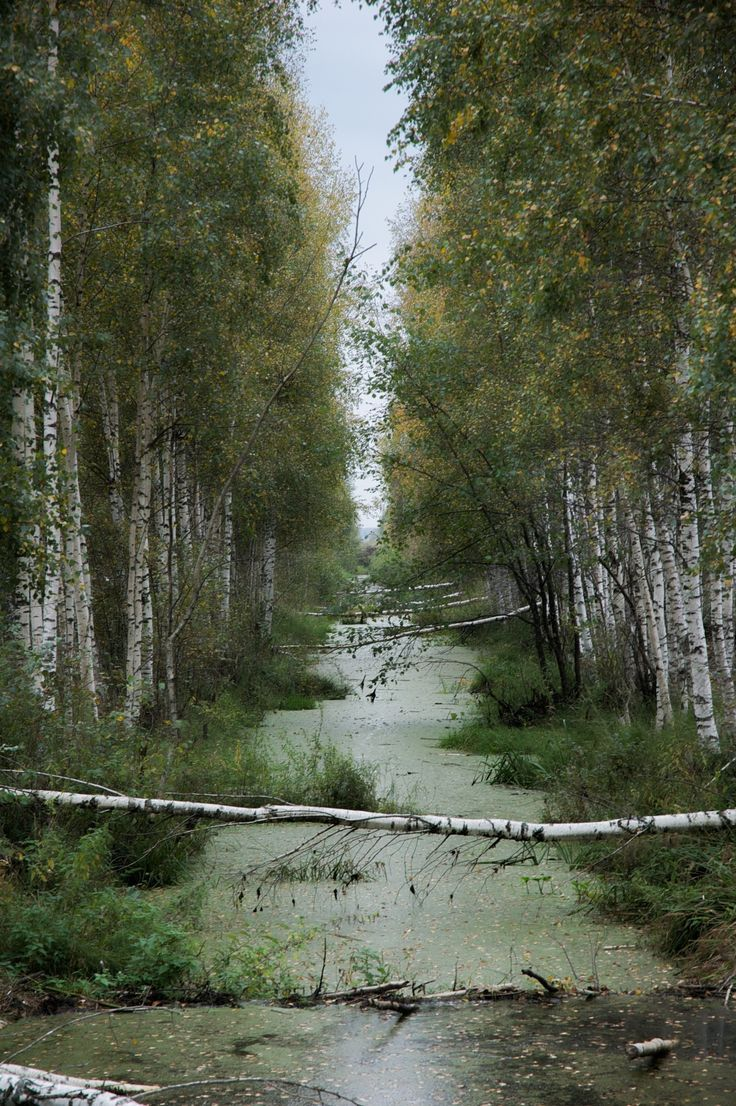 Peatlands 1 by Elena Stuukstly Kozyryatskaya on 500px