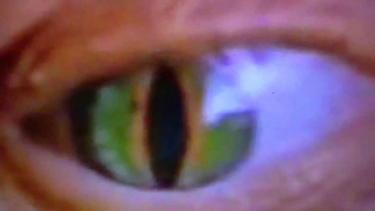 Best Reptilian Shapeshifter Alien Caught on TV