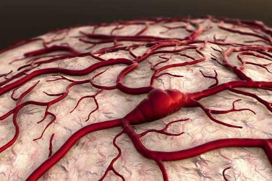 ARTERIAS LARGAS Si alinearas tus venas, arterias y capilares medirían 100.000…