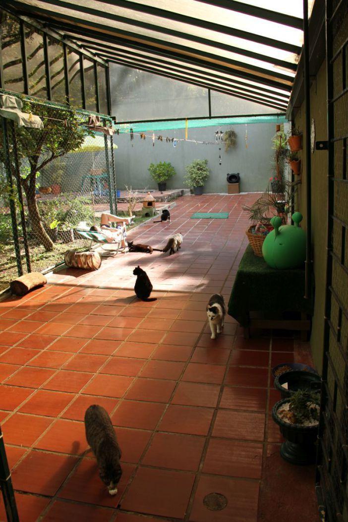 Cattery - Catio - Gatil em Curitiba/ Brasil