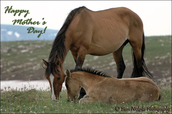 Happy Mother's Day from all of your friends at the Rancho...