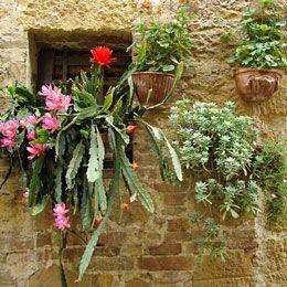 tuscan decor images   Tuscan style decorating - bringing nature inside