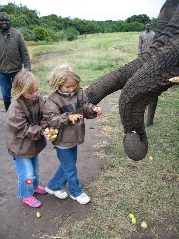 Take the children to the Elephant Sanctuary just around the corner