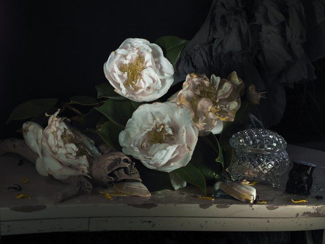 FIONA PARDINGTON New Zealand, b. 1961 Still Life. My Mother's Camelia and Mokohinau Black Coral 2011