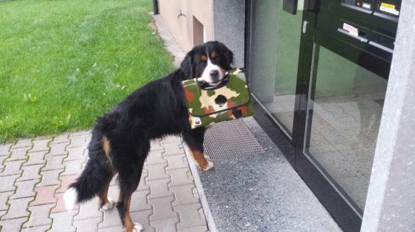 Tragetasche Hund groß.JPG