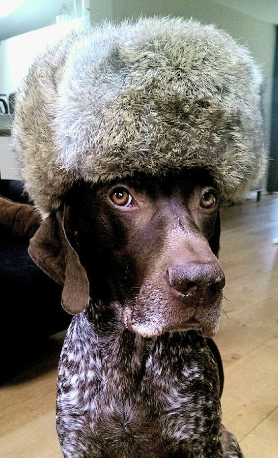 Ready to face winter #GSP #babyitscoldoutside