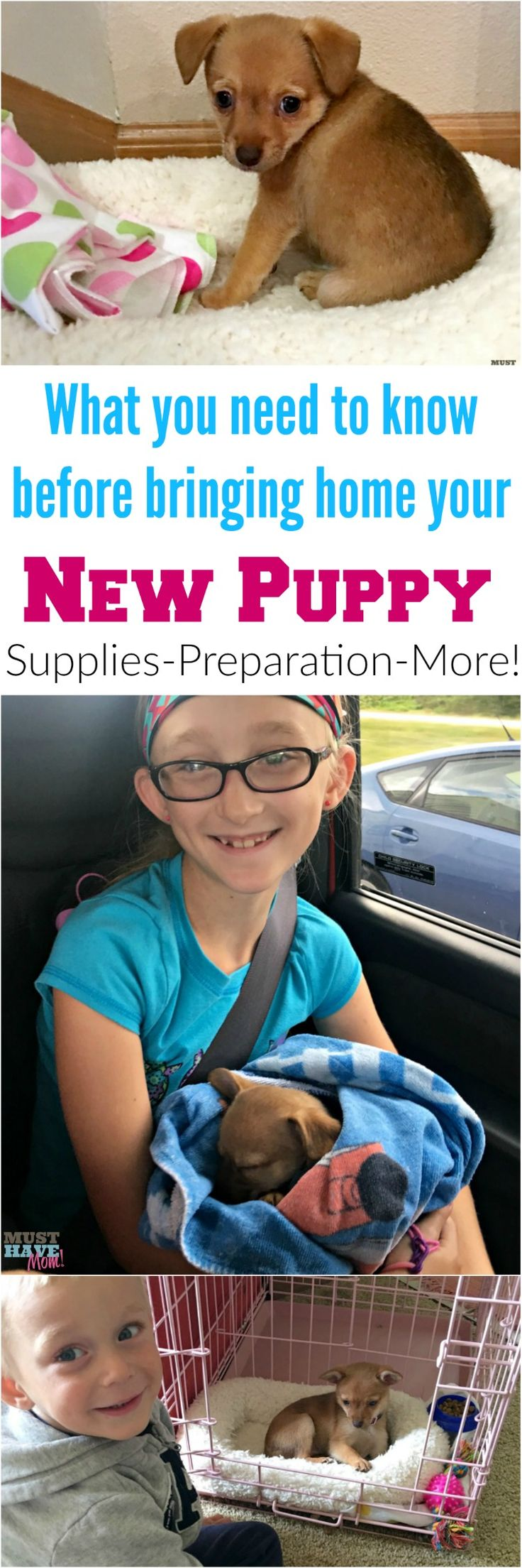 Ultimate guide to bringing home your new puppy! Everything you need to know before you bring home a puppy! Surprising supplies you might have forgot and other must haves you haven't even thought of! Pin for reference later!