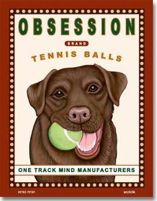 17 Best images about Chocolate Labs, Labrador Retrievers ...