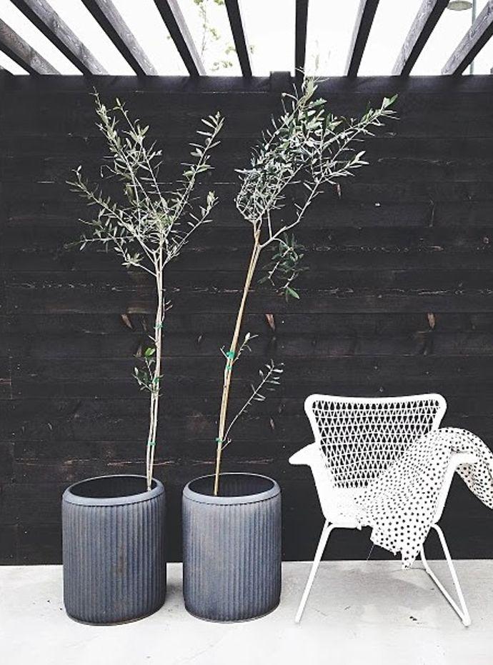 plants with black details as decoration | Casa Atelier blog