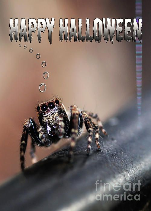 #HAPPY #HALLOWEEN for the #Spider #Lovers - Quality Prints and Cards at: http://kaye-menner.artistwebsites.com/featured/happy-halloween-for-the-spider-lovers-kaye-menner.html  -
