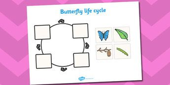 EYFS Butterfly Life Cycle - australia, life cycle, butterfly