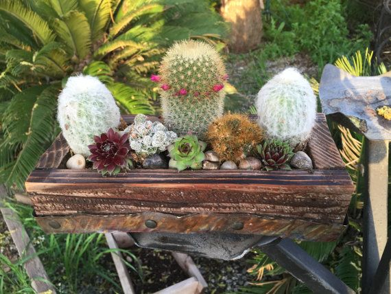 Rustic live plants cactus succulent arrangement in 100-year-old barn wood planter with copper trim. great gift for him. Spring Centerpiece