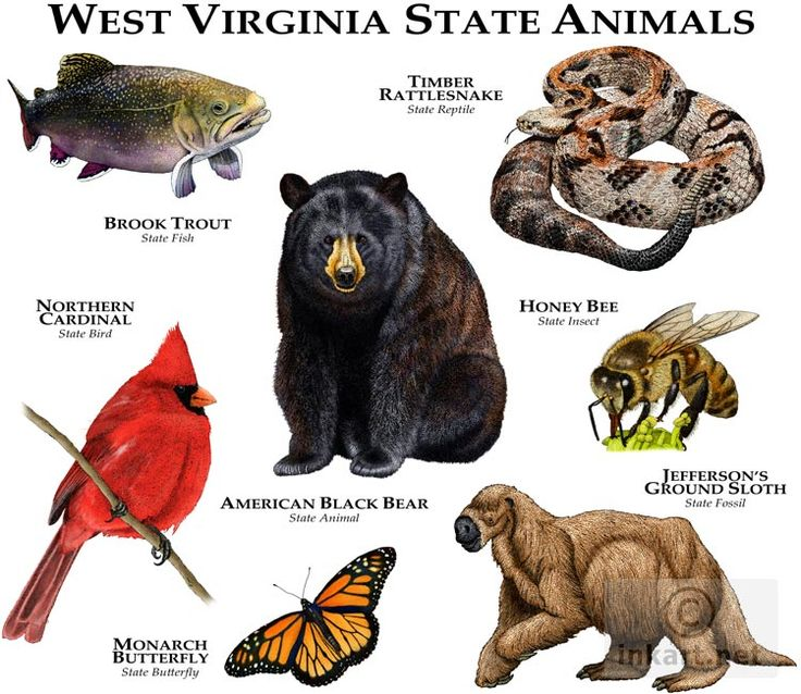 40 Best State Animals Images On Pinterest