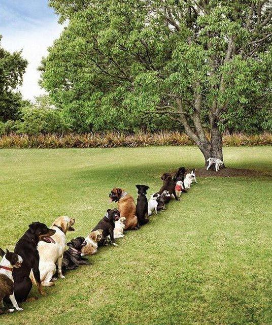Problems of deforestation.
