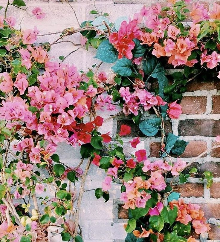 Flower Roses Pinterest: 1493 Best Flowers Images On Pinterest