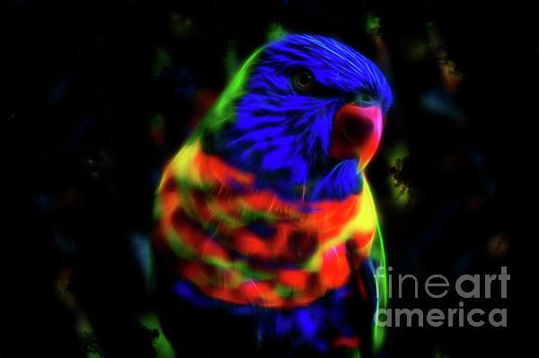 This artwork shows a colourful Australian bird, the beautiful rainbow lorikeet. Inspired by watching lorikeets in my backyard. This fractal rainbow lorikeet was created in Photoshop. Created by Tracey Everington of Tracey Lee Art Designs. Print and Merchandise available