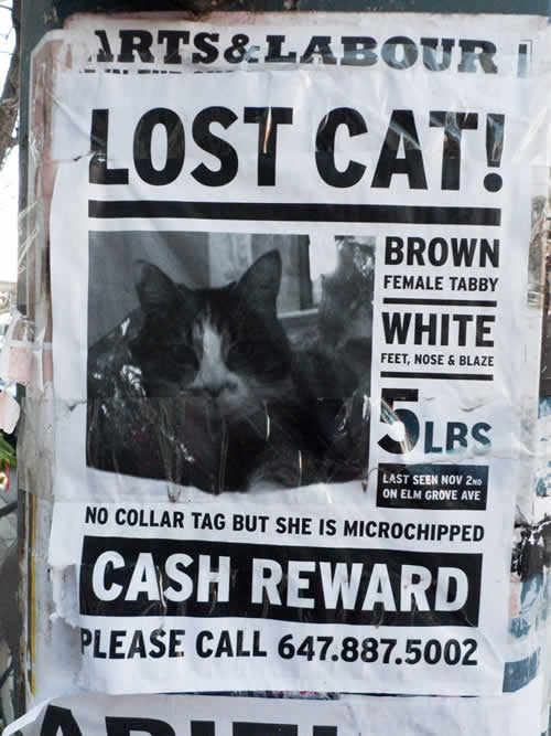 17 best Lost Cat - What do our pets do when they\u0027re not with us