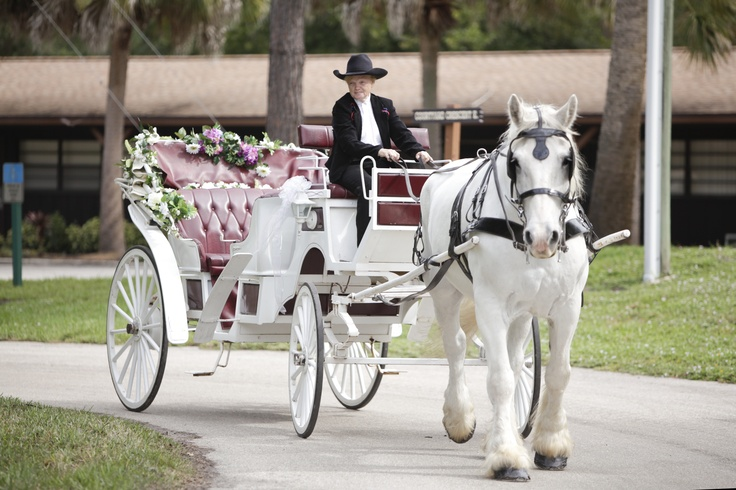 Horse And Carriage For Wedding Country Wedding Ideas