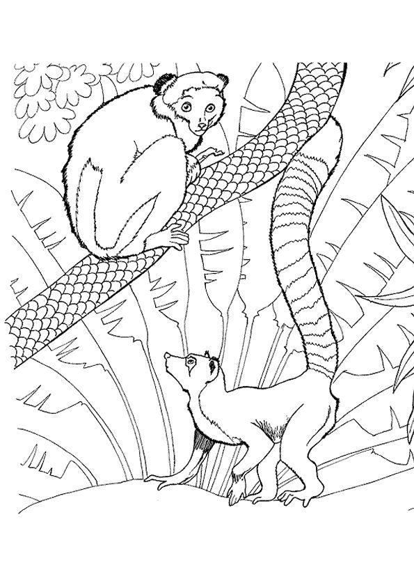 374 best coloriages animaux de la jungle et de la savane - Dessin de singes ...
