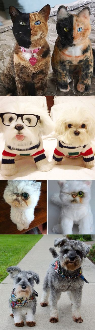 """""""Cuddle Clones"""" will make an exact plush replica of your pet for about $200 - WOW."""