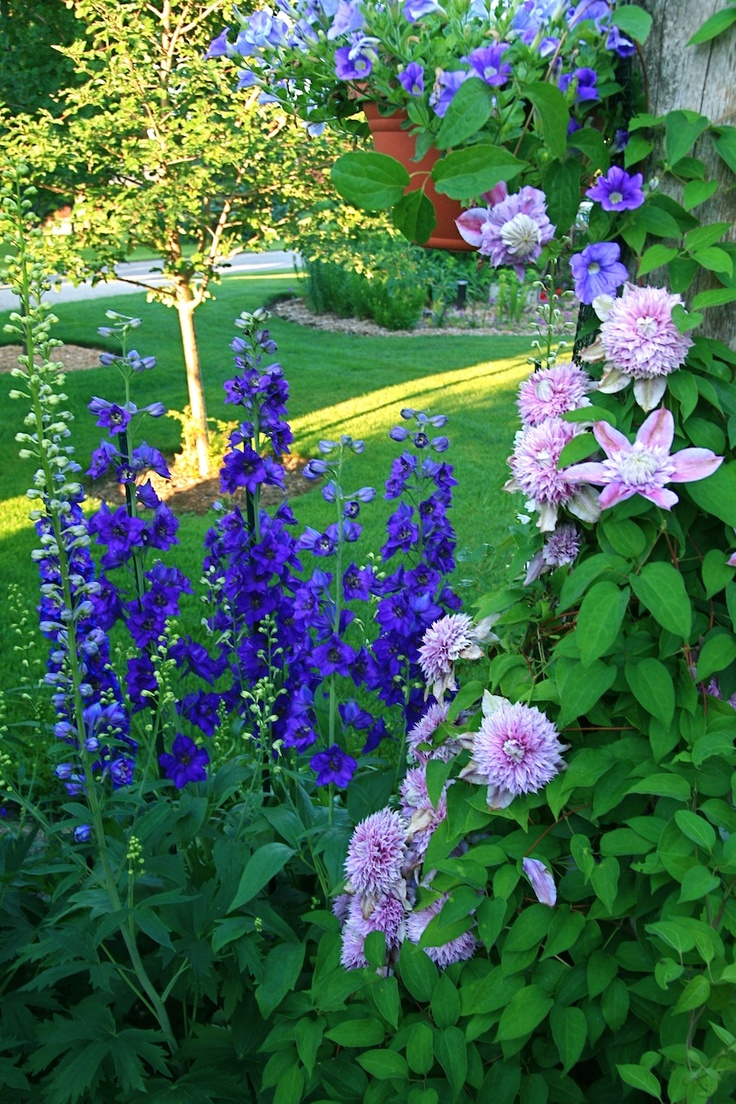 best gardening images on pinterest decks gardening and landscaping