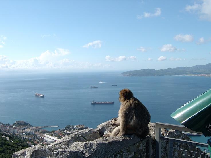 ...la scimmietta della Rocca di Gibilterra..
