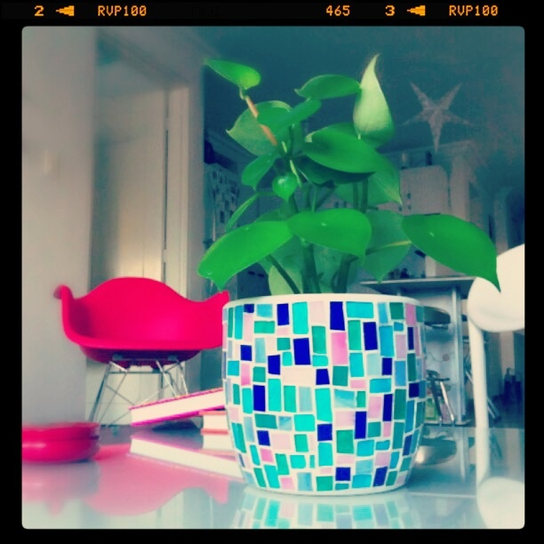 My new plantpot by Diana Giraldo