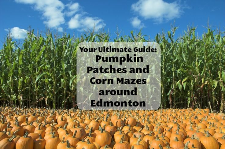 Look good and have fun with this ultimate guide to Pumpkin Patches and Corn Mazes In and Around Edmonton. Presented by Mark's.