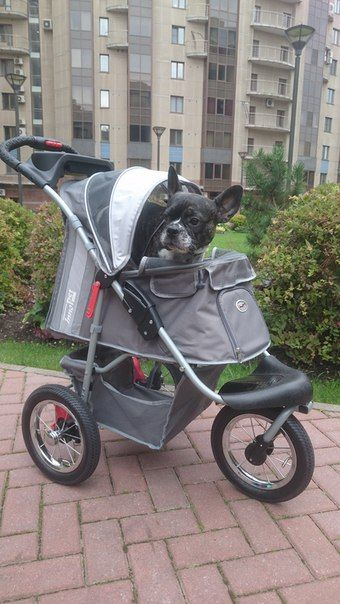 Брют на прогулке #innopet, #коляскадлясобак, #dogbuggy