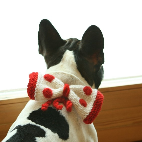 frenchieFrench Bulldogs, Frenchie Loaded, French Kisses, Frenchie Bows, Bouledogue Français, Frenchie Rules, Frenchie Fries, Fabulous Frenchie, Face Dogs