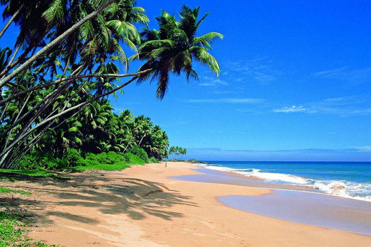 Malgré sa taille réduite, le Sri Lanka possède d'innombrables étendues de sable. Avec ses plages fabuleuses, un bon choix d'hébergements et d'activités - de la plongée au surf -, le pays est prisé des voyageurs en quête de plaisirs balénaires. Bien que tout classement soit sujet à controverse, voici nos plages favorites au Sri Lanka.
