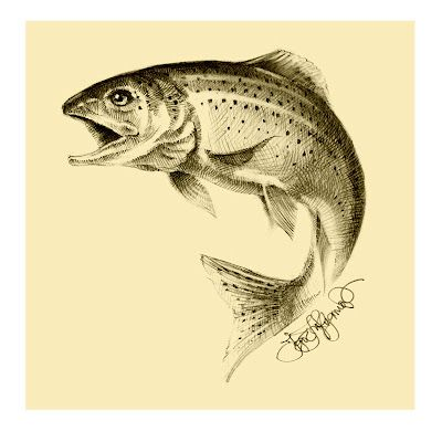 Trout Sketch Trout drawing for exmoor white