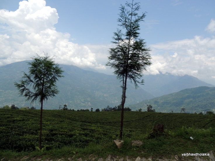 View of Tea Gardens