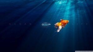ocean desktop backgrounds free-NclL