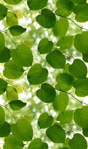 Ella Doran Sunlight Through Leaves Green And White Wallpaper Main Image