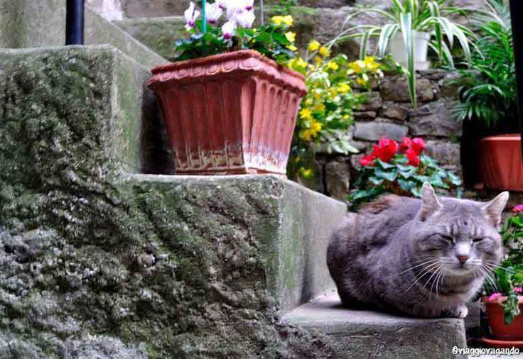 5 posti per gli amanti dei gatti (in cui andare a San Valentino)