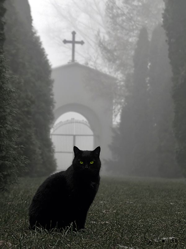 Love what this photo says!.. Truly believe cats have a sixth sense!.. Lodz - Old Cementary by ~kamzik on deviantART