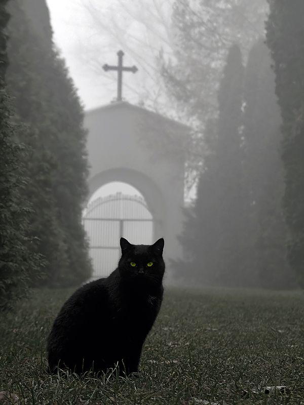 Old Cemetery by ~ kamzikBlack Cats, Cemetery, Dark, Halloween Pictures, Kitty, Blackcat, Animal, Cat Photos, Happy Halloween