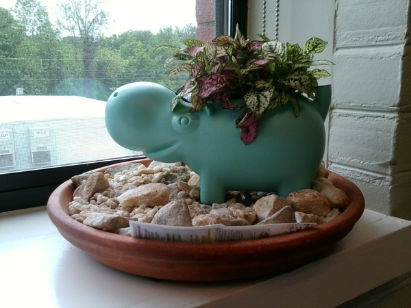 Planter I made from a Hippo watering can... looks great in my office! home-sweet-homes