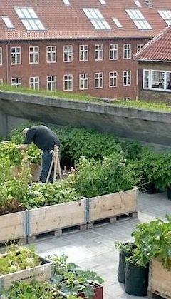 Like the idea of raising boxes on top of pallets Vegetable roof garden, Copenhagen, Denmark