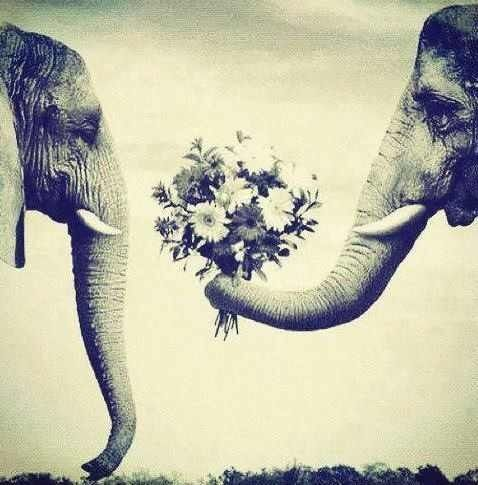 good vibe elephant | elephant love. | good vibes